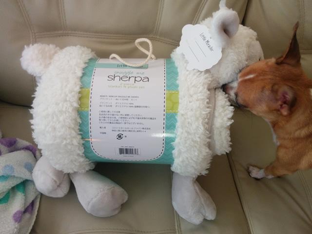 コストコシャーパブランケット羊2014